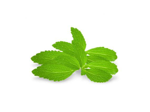 organik-stevia-w1